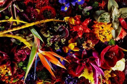 encyclopediaflowers_68_69