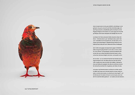 somepigeon_sf1_ds-11