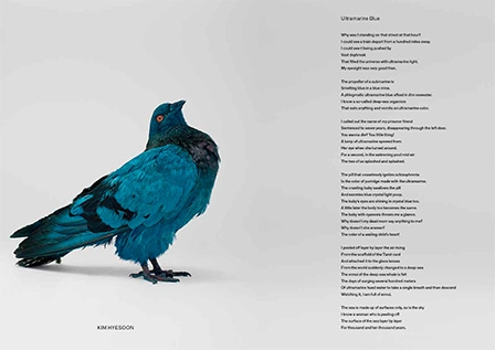 somepigeon_sf1_ds-36