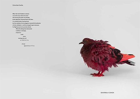 somepigeon_sf1_ds-61