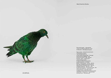 somepigeon_sf1_ds-8