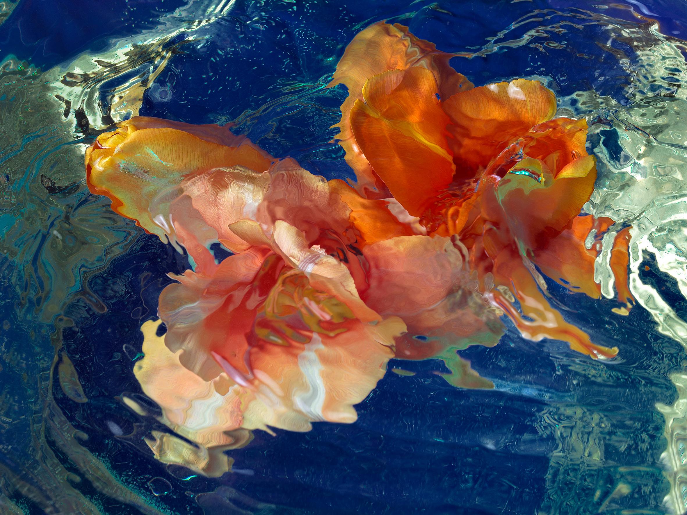 Blossom_Anna-Halm-Schudel_09_Tulpen-Blumenmeer[1]